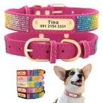 Pet accessories – Personalized Dog Collar | Rhinestone Pet Collars | Small Dog ID Collars
